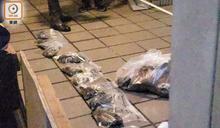 政府去年至今年上半年接438宗虐待動物舉報 僅7%案件被控