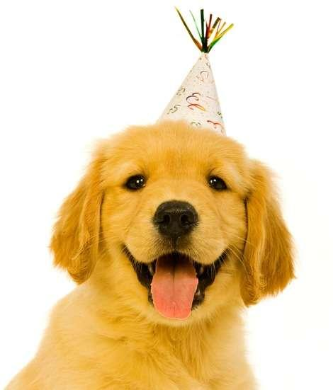 10 Dog Breeds Who Love to Party