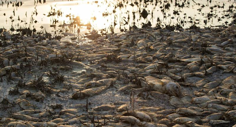 Tens of thousands of dead fish lie on the shore of Koroneia Lake in northern Greece.