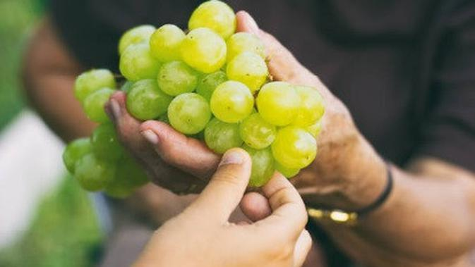 ilustrasi buah anggur. (iStockphoto)