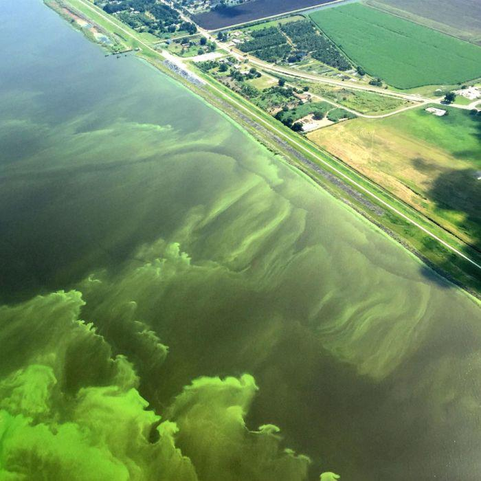 An aerial view of Lake Okeechobee in Florida shows an algal bloom