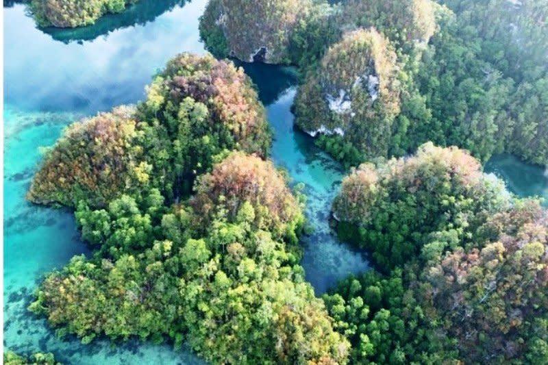 Pulau Papua miliki keanekaragaman tumbuhan tertinggi  di dunia