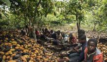 可可農場童工困境受疫情影響更險峻!象牙海岸童工比例增加3%!