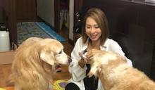為患病愛犬豪擲700萬買樓 《東張西望》女神主持 - 李旻芳相集
