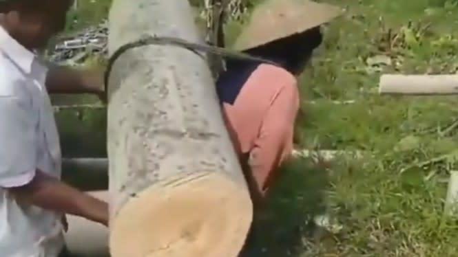 Viral, Wanita Tua Menggendong Batang Pohon Besar