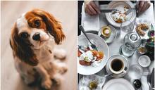 狗藏嬰兒車硬闖「禁寵」餐廳 客怒給1星:毛孩比幼孩乖