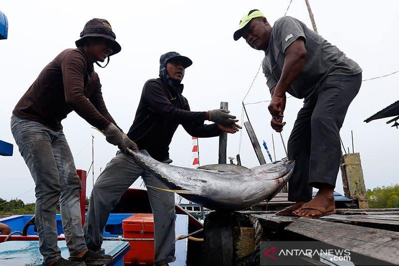 Pengamat: Perbanyak kapal ikan, optimalkan tambahan kuota ikan tuna