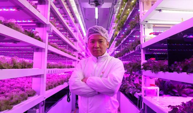Gordon Tam, a co-founder of local hydroponic cultivation firm Farm66, is eyeing exporting the start-up's know-how to Dubai. Photo: K. Y. Cheng