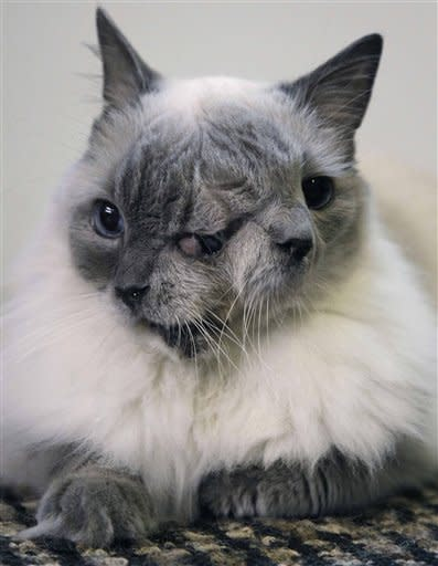 A cat with two faces, named Frank and Louie, sits on a mat in his home in Worcester, Massachusetts.  The animal is known as a Janus cat, named for the figure in Roman mythology with two faces on one head. The owner calls the face on the left Frank, while the face on the right she identifies as Louie. The cat set a Guinness record by surviving for 12 years in Massachusetts. (AP Photo/Steven Senne, File)