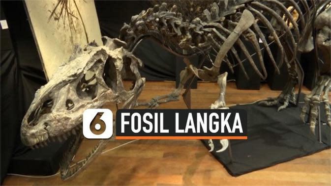 VIDEO: Fosil Langka Allosaurus dilelang Seharga 3 Juta Dolar Amerika