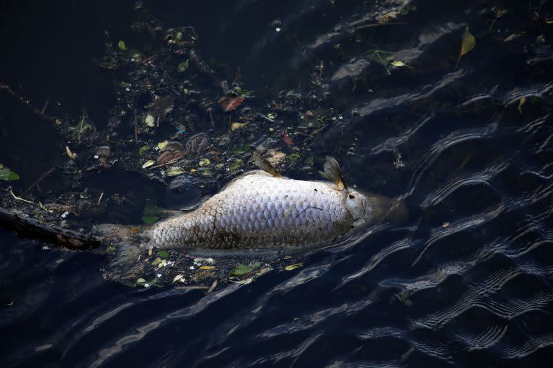 Belgium blames France after finding tonnes of dead fish in river