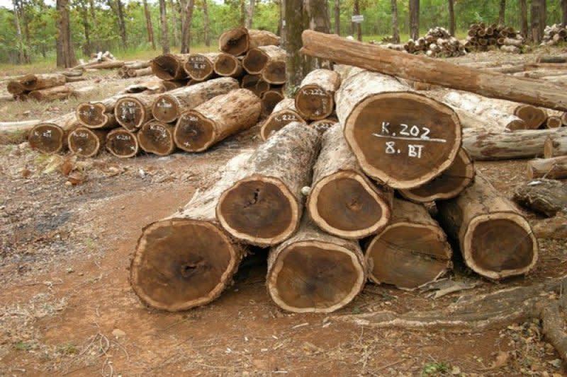 Kebijakan SVLK dinilai bebani industri hilir kayu
