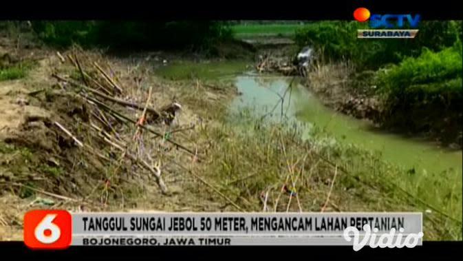 VIDEO: Tanggul Sungai di Mojokerto Jebol Ancam Ratusan Rumah Warga