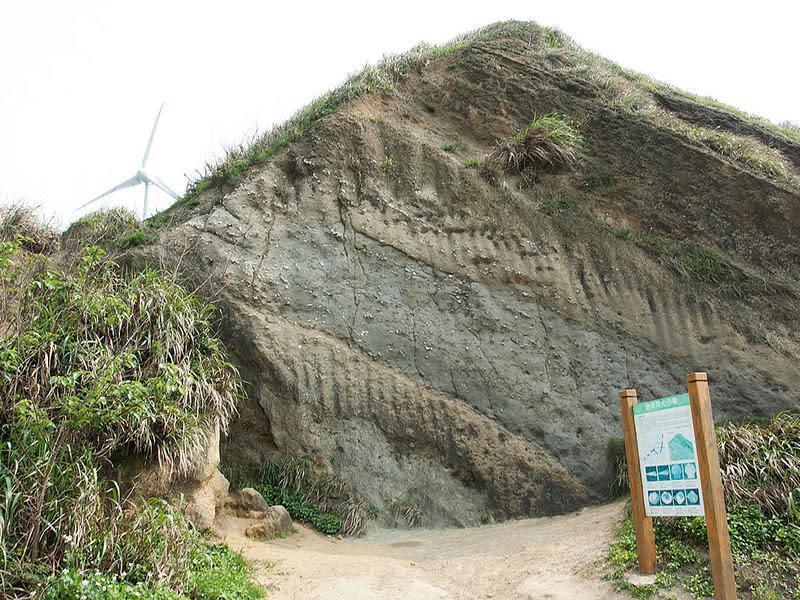 過港貝化石