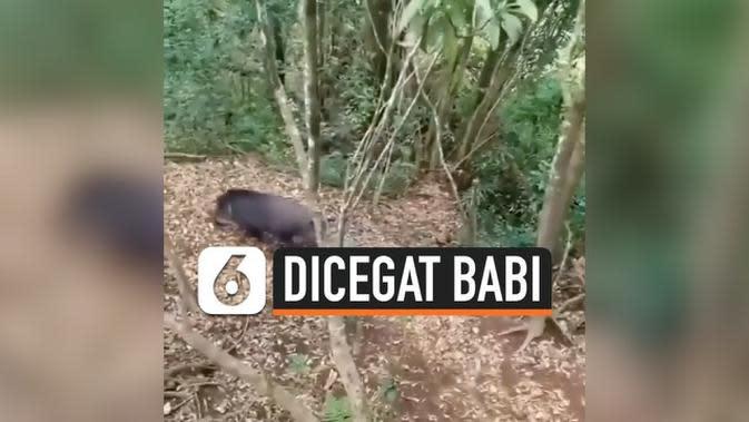 VIDEO: Dicegat Babi Liar, Para Pendaki Terpaksa Panjat Pohon