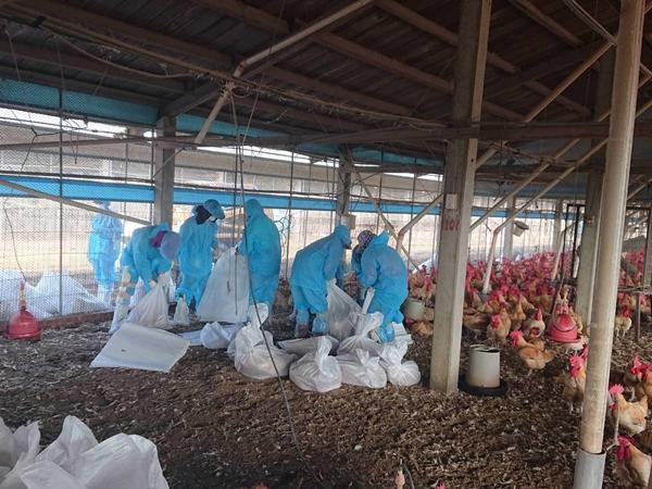 「禽流感」是什麼?