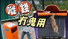 新型垃圾桶貴夾廢 動物照摷播疫高危