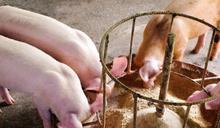 食品業談永續經濟,從飼料改革或許是一個好方法!