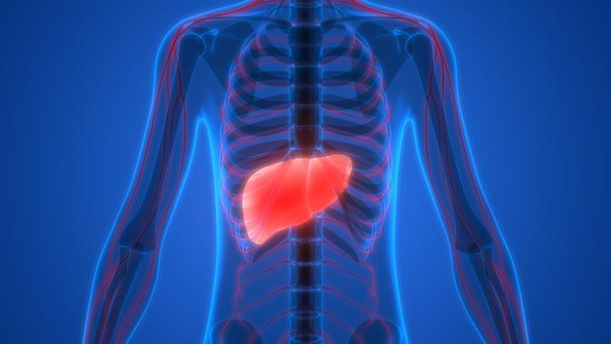 Kolesterol Tinggi Juga Sebabkan Fatty Liver (Magic-mine/Shutterstock)