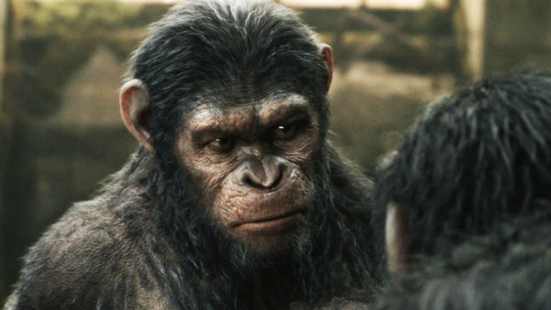 Caesar from Planet of the Apes is just one of the studio's efforts. Photo: Supplied