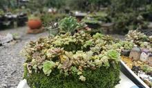 療癒製造所 宜蘭木渠多肉樂活農場