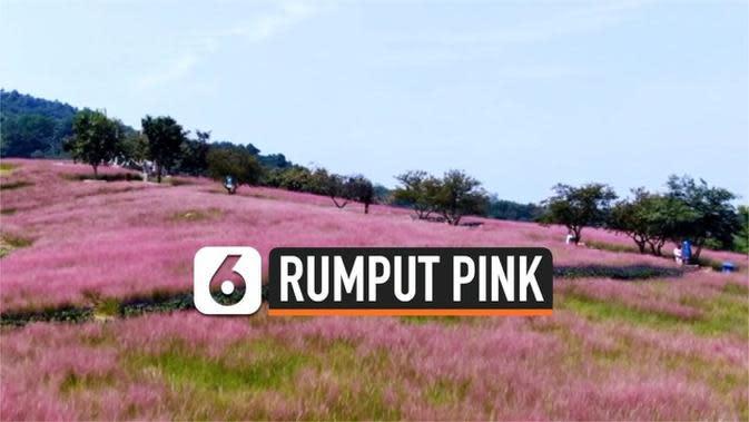 VIDEO: Padang Rumput Berwarna Pink Kembali Muncul di China