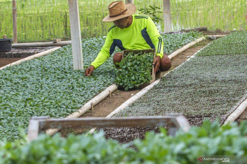 Model pelatihan kostratani diharapkan cetak banyak wirausaha pertanian