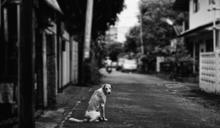 【Yahoo論壇/曾志超】從小黑事件看台灣流浪犬問題