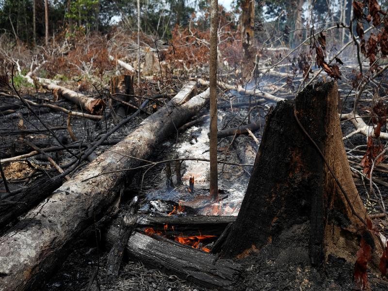 「地球之肺」野火肆虐 今年已7.6萬起大火