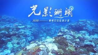 臺灣(2020年)珊瑚大白化帶給我們的警訊   光影珊瑚監測計畫