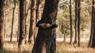 獨處在森林