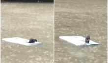 信義區淹水「鼠鼠的奇幻漂流」 網驚:拍攝者不救?