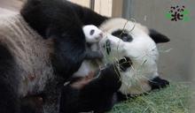 夜訪動物免曬太陽!台北市立動物園暑期夜間開放到9時