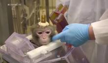 猴子頭殼全被鑿開!研究員:萬人有福