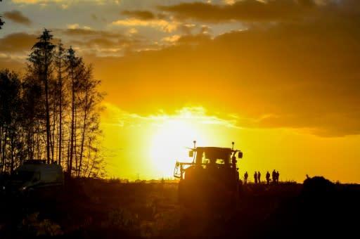 An ancient German forest gets a reprieve
