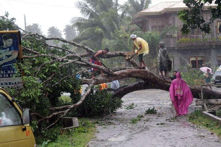 Workers clear a road with a fallen tree after Typhoon Bophal hit the city of Tagum, Davao del Norter province, on the southern island of Mindanao on December 4, 2012.