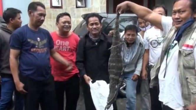 Hujan Deras Biawak Masuk Kantor di Dharmawangsa, Karyawan Berlarian