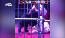 被黑熊咬沒受傷只因「早把牙齒鋸掉」 網友怒喊拒動物表演