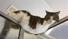 洗澡「感覺毛毛的」 抬頭發現貓咪凝視:奴才在幹嘛?