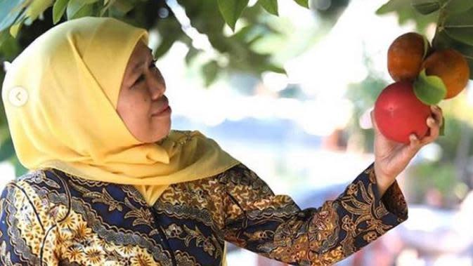 Khofifah Indar Parawansa menjelaskan tentang khasiat pohon mentega (Dok.Instagram/@khofifah.ip/https://www.instagram.com/p/B4ltxS6A-s5/Komarudin)