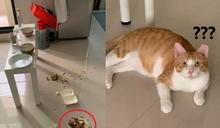 橘貓將拜拜供品撒一地 她驚:哪來的膽敢翻地基主的桌?