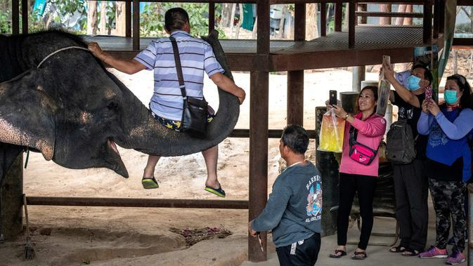 Seekor gajah mengangkat turis berwisata di Taman Chang Siam, Pattaya, Thailand, Rabu (12/2/2020). Chang Siam Park adalah salah satu primadona bagi wisatawan China di Pattaya yang kini berangsur sepi karena penyebaran virus corona covid-19. (Mladen ANTONOV / AFP)