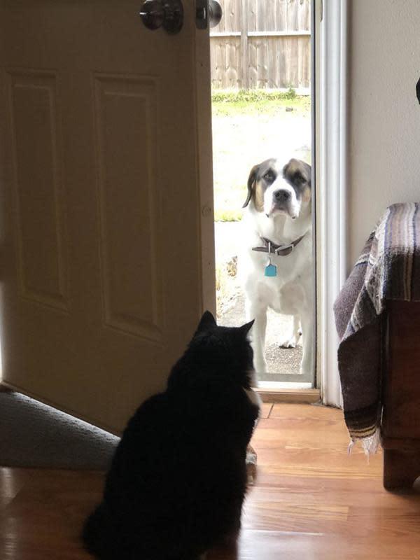 Sikap jahil kucing pada anjing. Sumber: BoredPanda