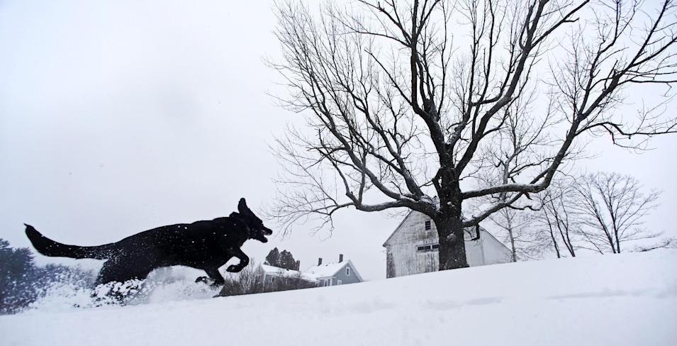 Luna, a black Lab mix, frolics in fresh snow in East Derry, New Hampshire, Thursday, Dec. 27, 2012. The southern N.H. area received about eight inches of snow from the winter storm. (AP Photo/Charles Krupa)