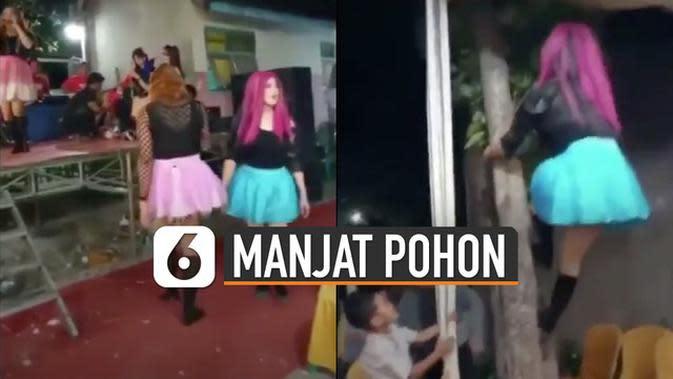 VIDEO: Kocak, Atraksi Pedangdut Waria Manjat Pohon