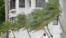 【浪卡遠離】當局收17宗塌樹報告 3人風暴期間受傷