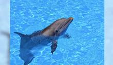 超逼真「海豚機器人」誕生 研究人員:盼取代表演秀…讓海洋動物回歸自然