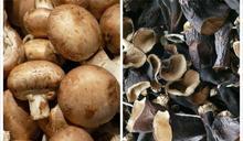 為什麼香菇比木耳貴?內行曝「關鍵原因」:香菇價值更高