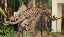 海邊慢跑撿到寶 科學家發現恐龍化石