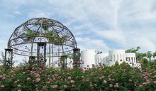 臺北玫瑰園浪漫訴情懷 因為玫瑰是最佳解語花